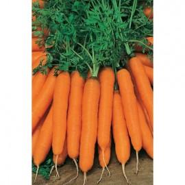 Морковь Амстердамская 2г